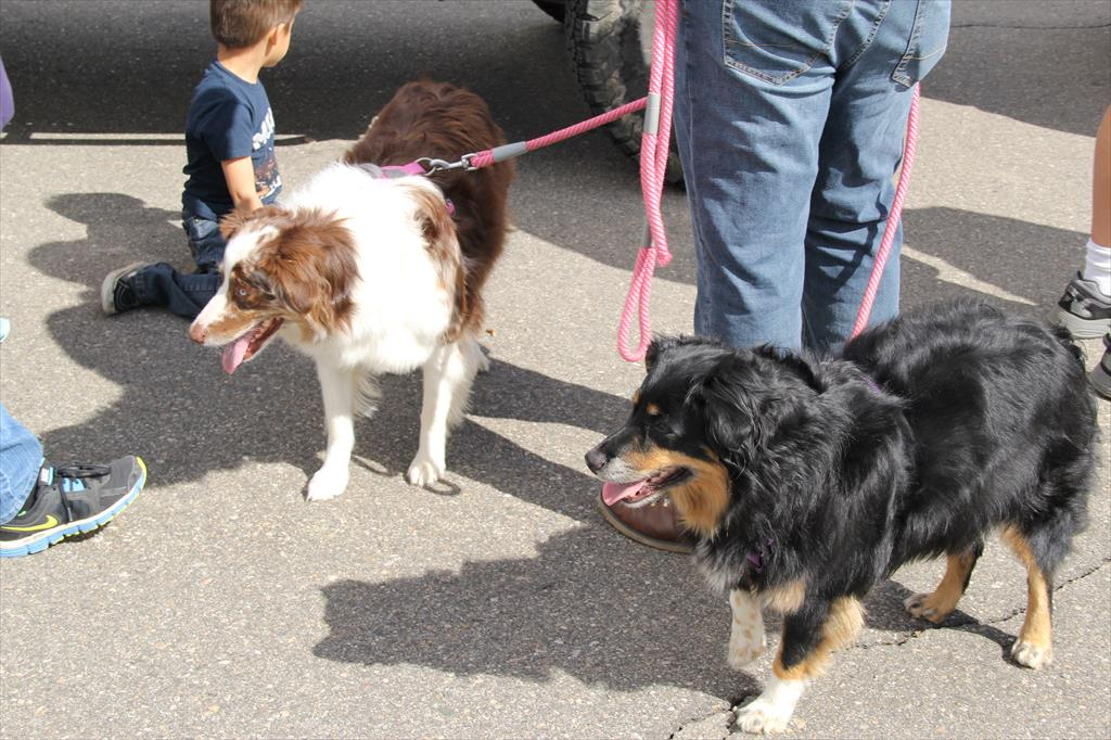 Dogs at the Jeep Jaunt Event