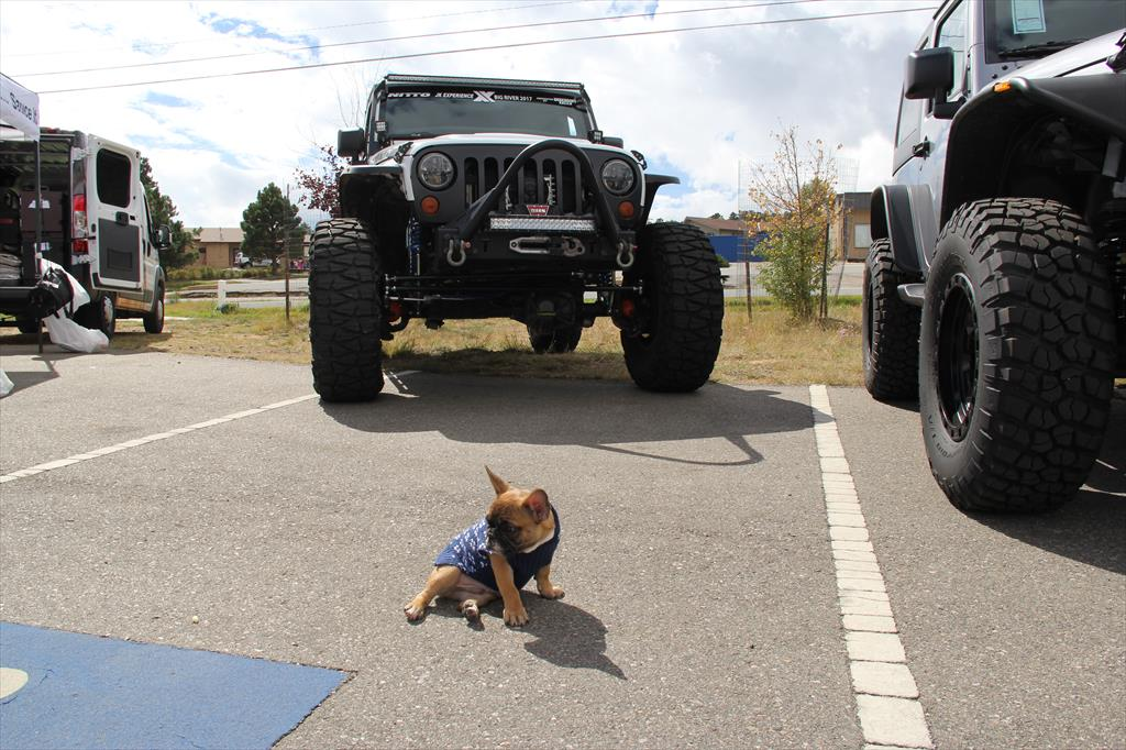 Puppy in front of a Jeep