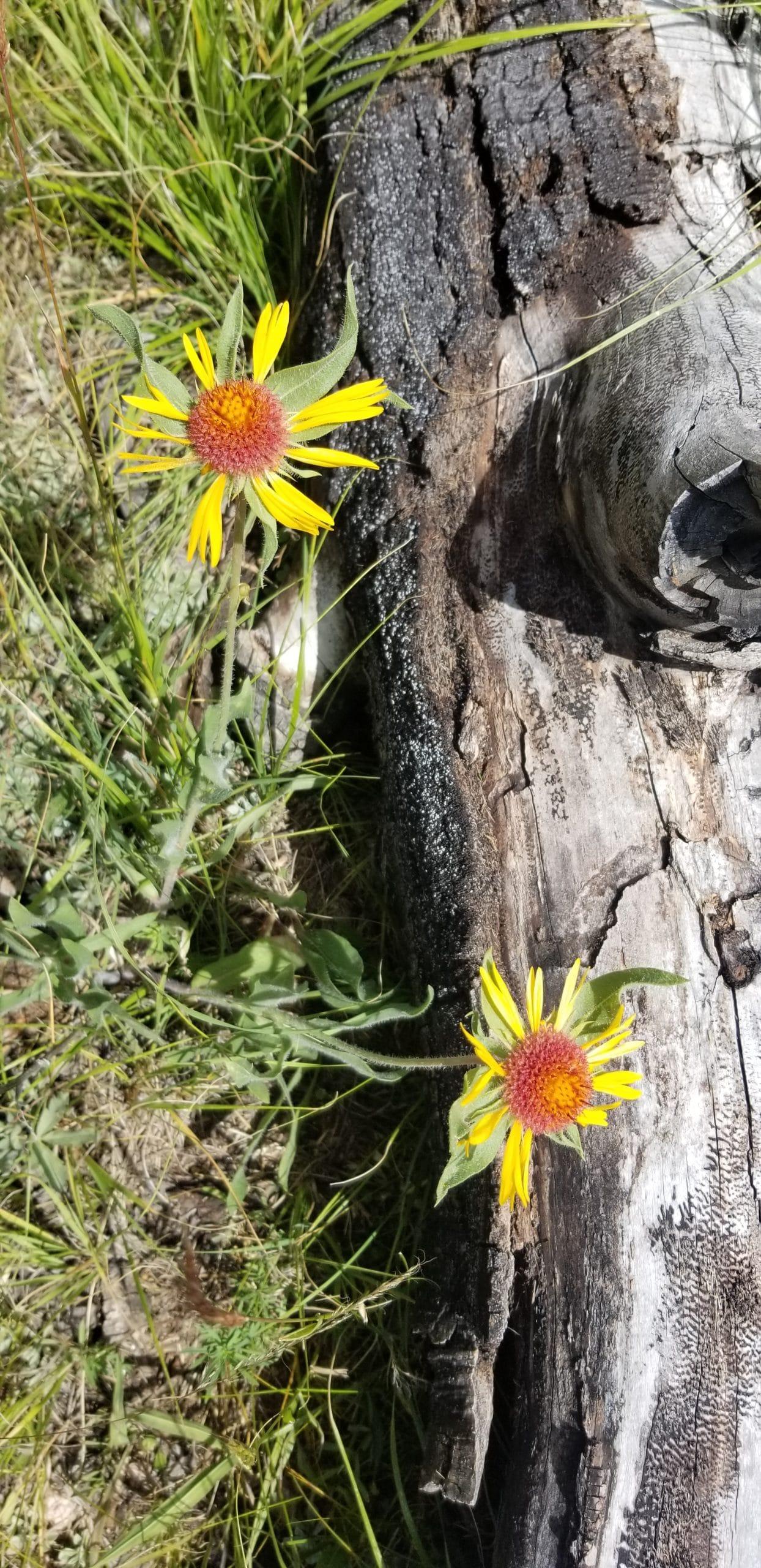 Flowers found on trail