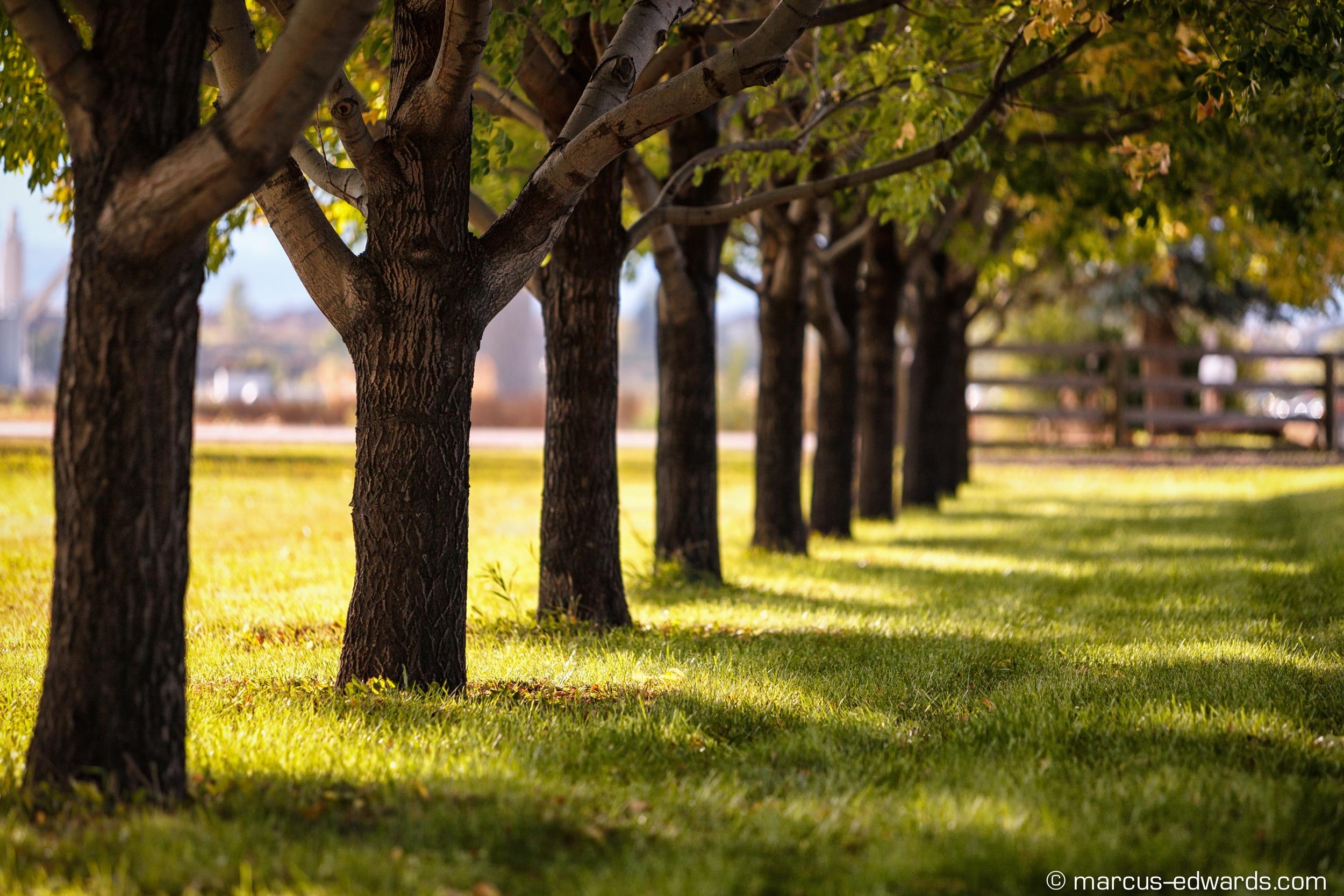 Trees at photoshoot